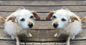 "a pair of terriers looking sad with the caption ""we need some emotional support"""