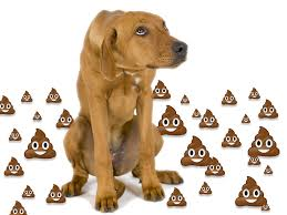 dog with poop emojis